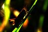 Grasshopper (na_photographs) Tags: wasser water tropfen drop regen rain tau dew wet nass grashüpfer grille zirpen sommer light licht sonne sun gegenlicht fühler profil profile insekt nsect