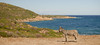 vacanze sarde_-61 (Trittonando) Tags: asinara sardegna sardinha asinello bianco carcere