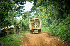 The 'Water Towers' of East Africa (CIFOR) Tags: foodsecurity foodproduction foodsupply truck beverage mau tea foodavailability diet forests drink food road rainforests foods cuisine transportation tropicalforests foodandnutrition kenya nonalcoholic drinks transport bomet ke