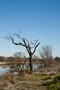 20170822_5342_1D3-135 Dead tree (johnstewartnz) Tags: canon canonapsh eos apsh 100canon 1dmarkiii 1d3 1dmark3 28135mm ef28135mmf3556isusm newbrighton avonriver bluesky cloudless tree deadtree 100 unlimitedphotos
