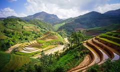 Terraced rice field in Northern Vietnam (phuong.sg@gmail.com) Tags: agriculture ancient asia asian bali beautiful beauty bio china chinese county crop culture ecology farm field food green growth hagiang hill landscape laocai laos natural nature organic paddy pattern plant plantation province range reflection region rice rural sapa terraces terracing valley vietnam village water yenbai