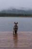 Dog On A Dock (Following Keaton) Tags: vermilionlakes dog lake landscape nature schnauzer wilderness