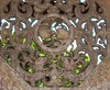 精湛廟宇工藝特寫 Exquisite Temple Crafts Close - Up (葉 正道 Ben(busy)) Tags: 龍山寺 longshanˍtemple 鹿港龍山寺 鹿港 changhua taiwan lukang arch art temple 寺院 landscape 風景 lukangˍtown crafts 工藝 historicˍbuilding 歷史建築 historicalˍsites 古蹟 彰化 台灣 藝術 woodˍcarvings sculpture 雕刻 木雕 buddhism 佛教