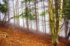 Alberi nella nebbia (Marco Allegro) Tags:
