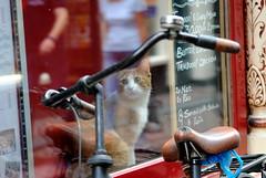 Let me out! (borneirana) Tags: cat gatos amsterdam pets mascotas bike bicicleta travel viajes viajar viaxar fahrrad ngc street photography photo life libre imagination animales animals azul blue colores colourful