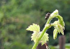 crop-1-bug