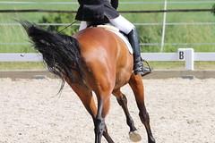 _MG_5781 (dreiwn) Tags: dressage dressurprüfung dressurreiten dressurpferd dressyr ridingarena reitturnier reiten reitverein reitsport ridingclub equestrian horse horseback horseriding horseshow pferdesport pferd pony pferde dressur dressuur tamronsp70200f28divcusd