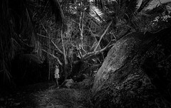 scared in woods (anthony.vairos) Tags: wood noiretblanc blackwhite bw shadow girl seychelles island ocean indien light look photo photography photographie nikon d750 sigma art 24mm f14 fullframe pleinformat manfrotto lightroom photoshop passion beautiful scared contrast travel tropical foret monochrome arbre forest