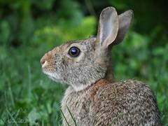 Close to your eyes... (NaturewithMar) Tags: bunny macro 7dwf wednesday closeup rabbit