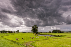 Dutch landscape with rainclouds (© Jenco van Zalk) Tags: cloud clouds rainclouds netherlands dutch holland zalk cow lake dike path lines rural countryside floodplains