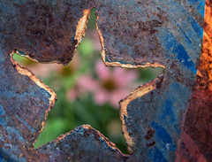 Lone Star - Explored September 11, 2017 (Anne Worner) Tags: macromondays rust anneworner em5 lensbaby lonestar velvet56 closeup f28 flaking flower macro manualfocus manualfocuslens star texture starshaped open cutout metal olympus olympusem5 shallowdof selectivefocus