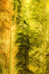ASPEN AND PONDEROSA PIROUETTE (Deborah Hughes Photography) Tags: aspens ponderosa lasalmountains medicinelake multipleexposures intentionalcameramovement incameraeffects intimatenature impressionism impressionistphotography abstractnature abstractphotography art abstracts
