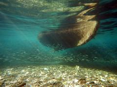 Under The Butt (steve_whitmarsh) Tags: greece skiathos underwater water sea coast boat animal fish nature