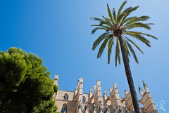 Mallorca in August (lostinavision) Tags: majorca mallorca spain summer hot august sunny green beautiful sharp contrast palma palm trees visiting travelling cathedral catedraldemallorca