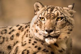 Snow Leopard-Phila 3-0 F LR 9-16-17 J664