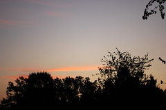 Almost Sunrise. (dccradio) Tags: lumberton nc northcarolina robesoncounty outside outdoors nature sky morning dawn earlymorning natural tree trees foliage autumn earlyautumn goodmorning silhouette pinkclouds pinktint leaves branches treebranches scenic
