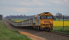 G540 and 8124 slowly creep up to the points to access the grain siding on 7737V empty grain (bukk05) Tags: railpage:class=4 railpage:loco=g540 rpauvicgclass2 rpauvicgclass2g540 g540 8124 gclass 81class wimmera westernstandardgaugeline wagons wheat explore export engine emd electromotivediesel emd16645e3b emd16645f3b railway railroad railpage rp3 railwaystation rail railwaystations train tracks tamron tamron16300 trains yarriambiackshire yarriambiack overcast photograph photo pn pacificnational pnruralbulk loco locomotive landscape jt26c2ss horsepower hp grain graincorp flickr freight diesel station standardgauge sg spring australia artc 2017 zoom canon60d canon clyde clydeengineering canola yellow victoria vr victorianrailway vline victorianrailways mainline murtoa