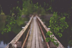 Praise the bridge that carried you over (Tracey Rennie) Tags: bridge sunshinecoast flickrcation eleven trees leaves gratitude
