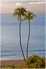Perfect Place for a Conversation - Maui, Hawaii (TravelsWithDan) Tags: pacificocean water longlight palmtrees twowomen conversation maui hawaii beach resort paradise canong3x frommybalcony 600mmlens kaanapali