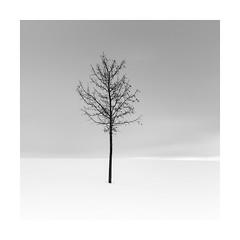 alone in snow (ArztG.|Photo) Tags: alone cold snow love tree long exposure square mono austria atmosphere arztg|photo