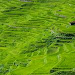 Detail of Maruyama Senmaida (Thousands of rice fields) (丸山千枚田)