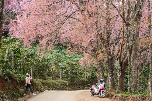 doi suthep pui chiang mai - thailande 19