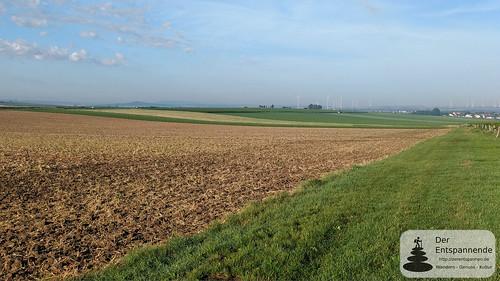 Felder und  Weinberge über Köngernheim