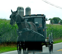 Family ride (afagen) Tags: pennsylvania lancastercounty amishcountry groffdaleconferencemennonitechurch wengermennonite oldordermennonite mennonite horseandbuggy buggy