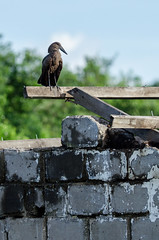 Beak (LynxDaemon) Tags: uganda construction rock stones wood house bird green