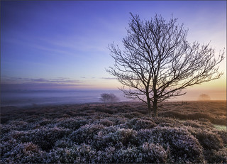 Maurice Young_Dawn Roydon Common