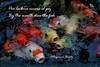 Alegoría/Allegory (Altagracia Aristy Sánchez) Tags: sarasota pez peces fish fishes américa fujifilmfinepixhs10 fujifinepixhs10 fujihs10 altagraciaaristy alegoría allegory