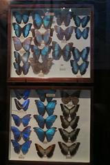 (andrew gallix) Tags: hornimanmuseum london