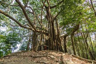 ramkhamhaeng national park - thailande 23