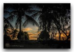 ENTARDECER NA AVDA. FRAGA MAIA. (manxelalvarez) Tags: entardecer atardecer solpor puestadesol pordosol nubes cielos paisajes feiradesantana bahia brasil contraluz siluetas