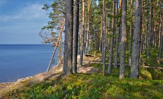 Konevitsa (Hevossaari), Laatokka. 💚 Island on the lake. Summer.