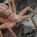 Pink spider on pine bark