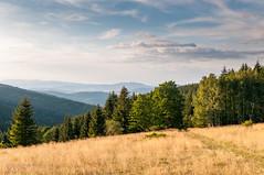 u schyłku dnia (MichalKondrat) Tags: drzewa sierpień polska 2017 natura kotlinakłodzka przyroda masywśnieżnika niebo pejzaż sudety zieleń dolnośląskie góry chmury krajobraz