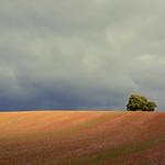 The hiding tree (Explored) thumbnail