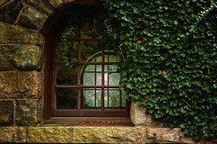 Through the Windows (SunnyDazzled) Tags: ivy stone building skylands newjerseybotanicalgarden garden ringwood antique windows evening history