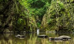 Water and rocks (Petr Sýkora) Tags: skryje kameny potok skála voda výlet water nature green silent foliage rocks reflection outdoor