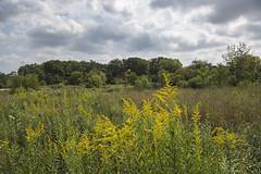 Meadow & Woods