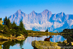 IMG_9823 (Photographie Maria) Tags: alm bergsee ennstal gipfel natur panorama reiteralm rippeteck schafe spiegelsee wandern ziege