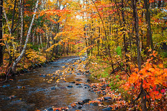 Poor Farm Brook (Robert Clifford) Tags: canon nh newengland newhampshire rebel robcliffordphotography robertallanclifford xsi autumn brook color fall foliage forest gilford landscape leaves outdoor photography poorfarmbrook rain river robertcliffordcom serene stream tree trees water wet