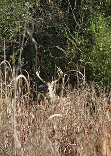 Alabama Luxury Whitetail Hunt 21