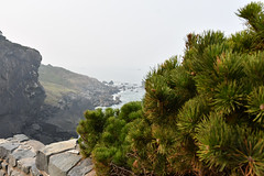 DEH_9828 (sobca) Tags: california californiastateparks coastalredwoods hwy101 patrickspointstatepark redwoodnationalpark sequoiasempervirens trinidad