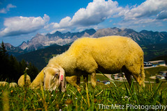 IMG_9895 (Photographie Maria) Tags: alm bergsee ennstal gipfel natur panorama reiteralm rippeteck schafe spiegelsee wandern ziege