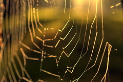begin again (joy.jordan) Tags: spiderweb dew light texture bokeh sunrise nature hbw