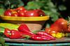 CKuchem-5558 (christine_kuchem) Tags: bauerngarten biogarten bioqualität ernte erntezeit fleischtomate garten gemüse gemüsegarten grün gurke nutzgarten paprika peperoni pflanze rarität sommer sorte sorten sortenvielfalt tomate vielfalt zucchini bio biologisch frisch gelb gesund lecker natürlich orange reif rot selten unbehandelt