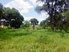 área verde con arbol (yajat54) Tags: nogales sonora picnic terrenos cabañas cabins nature naturaleza