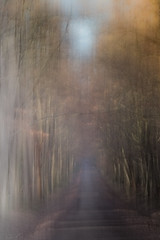 --- (montier_isabelle) Tags: blur icm sigma105 forêt bois quiet calme